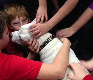 Oogy, the Disfigured Former Bait Dog, Dies Surrounded by His Loving Family
