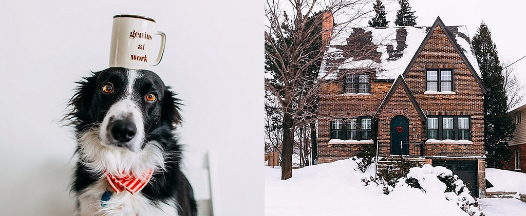 This Dog's Instagram Is a Cuter Version of Where's Waldo?