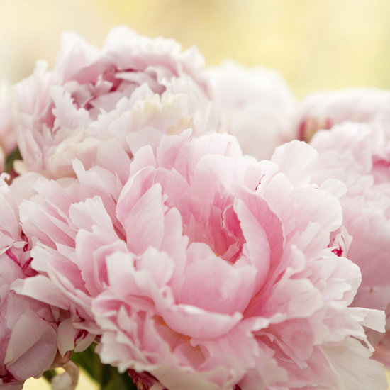 7 Beautiful Scents That Refresh and Revitalize