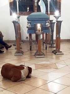 Stray Dogs Visit Animal Lover's Funeral to Mourn
