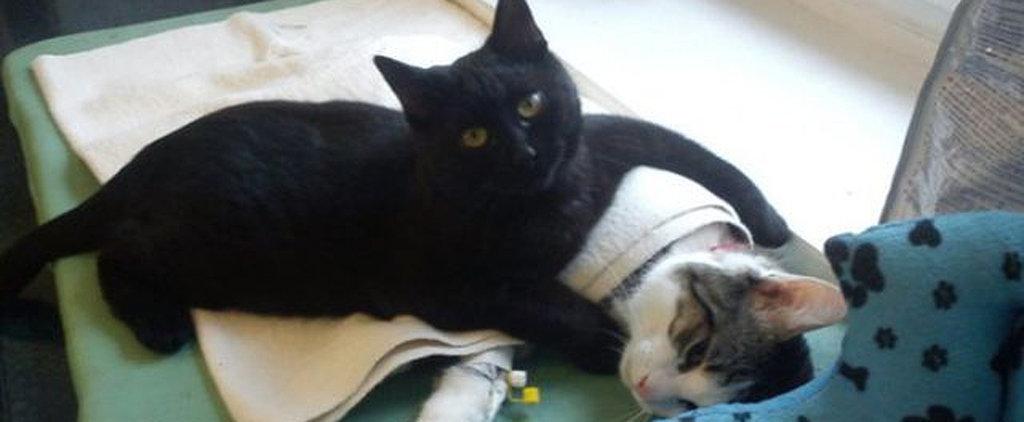 Nurse Kitty Will Make Everyone Feel Better