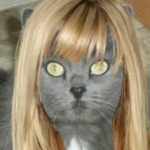 Help Me Pick the Best Celebrity Hairstyles for Me and My Cats!