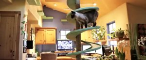 You Won't Believe How 15 Cats and 3 Men Live in 1 House