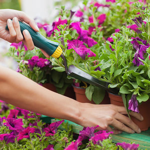 Find Your Green Thumb! First-Time Gardening Tips