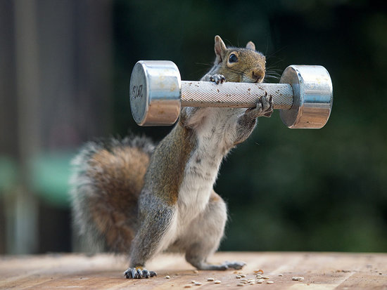 This Squirrel Wants to Know: Do You Even Lift?