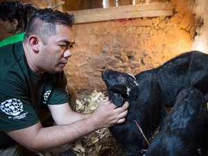 Humane Society Arrives in Nepal to Rescue Animals and Bring Hope