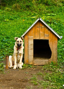 A North Carolina County Comes Together to End Dog Tethering