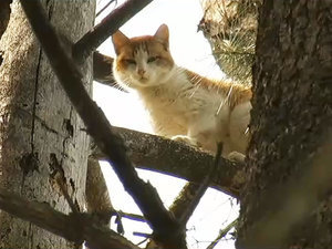 Cat Stuck in Tree for 5 Days Finally Gets Freedom