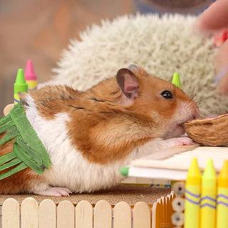 Tiny Hamster Tiki Party Video