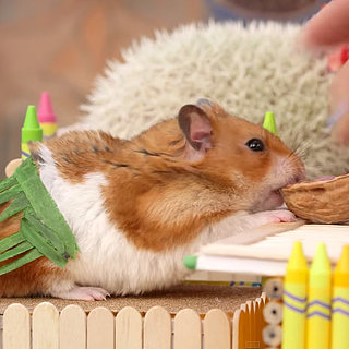 Tiny Hamster Tiki Party Video