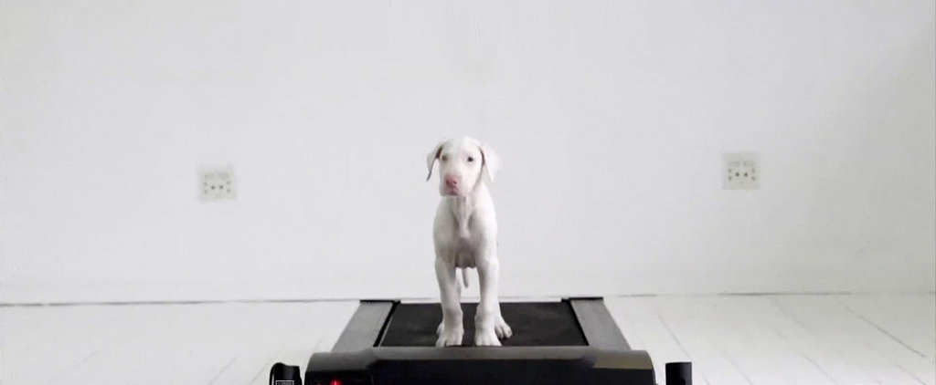 This Adorable Pup Fights the Odds Against Her With Love and a Treadmill