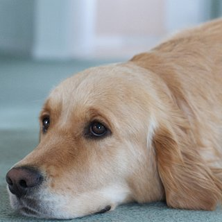 How to Prevent Common Dog Diseases
