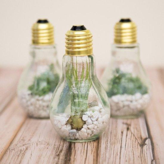 Easy DIY Lightbulb Terrarium
