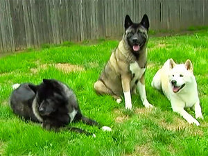 Dog Loses Eyesight, Dog Siblings Serve as Her Guide