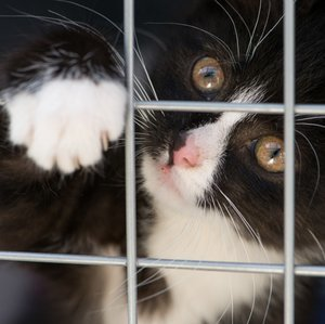 5 Tips to Being the Best Possible Cat-Shelter Volunteer