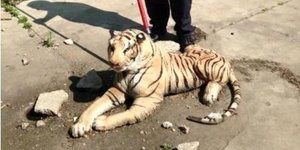 Animal Control Officer Confuses Stuffed Tiger For Real Thing