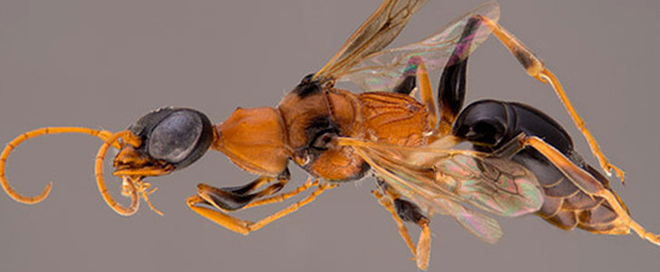 This Scary Wasp Was Named After a Harry Potter Creature