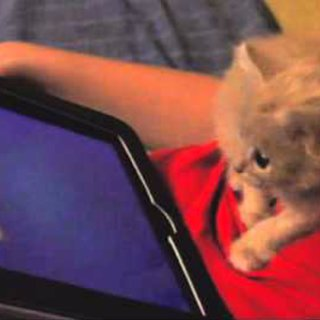 Kitten That Loves Going Cat Fishing