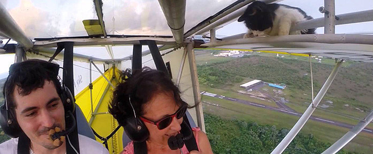 You NEED to See What Happened When This Kitty Snuck Onto a Glider Plane