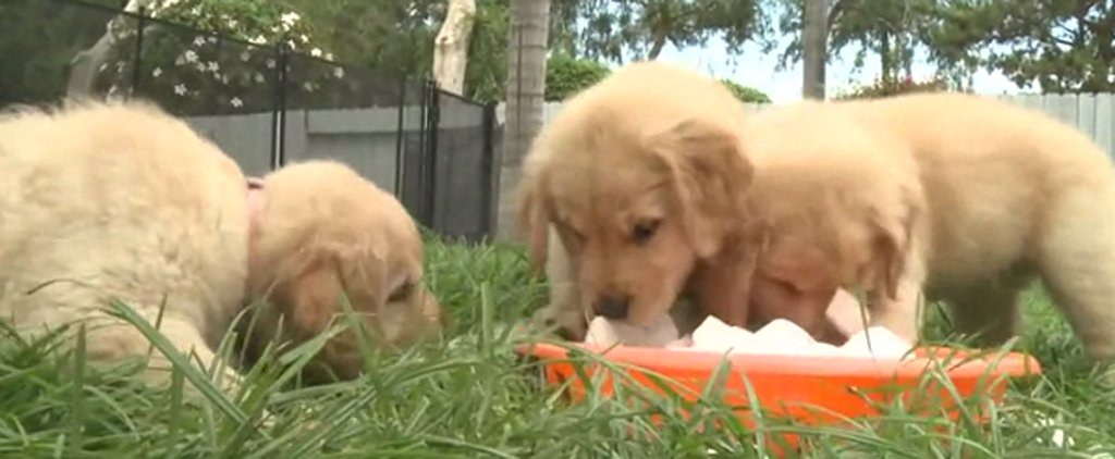 Just Try Not to Smile While Watching These Puppies Play With Ice