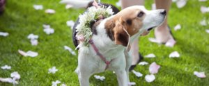 7 Tips to Consider Before Including Your Pet on Your Wedding Day