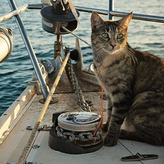 Couple Quits Jobs to Sail the World With Their Cat