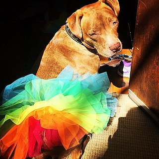 Pets Wearing Rainbows