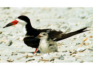 Florida Officials Searching for Reckless Couple Who Killed Seabirds and Damaged Turtle Nests