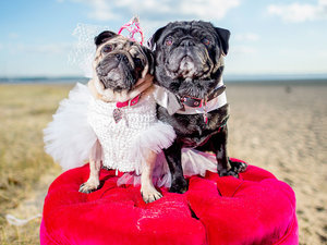 Pups Put on Their Best Tuxes and Gowns For a Chance to Win a Spot in <em>The Dog Wedding</em>