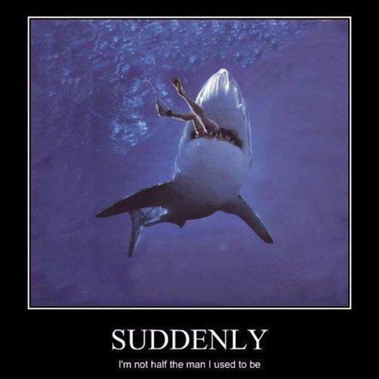 Best Shark Memes