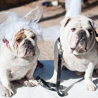 The Dog Wedding Movie Contest