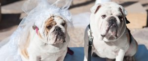 Meet the Winners of the Dog Wedding Movie Contest