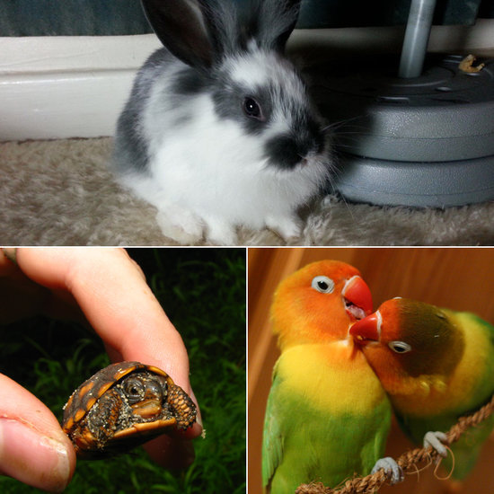 10 of the Cutest Exotic Pets