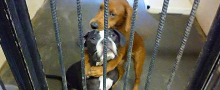 What Happened After This Photo of 2 Hugging Dogs Went Viral