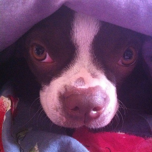 Get out from under the covers and walk me, please.