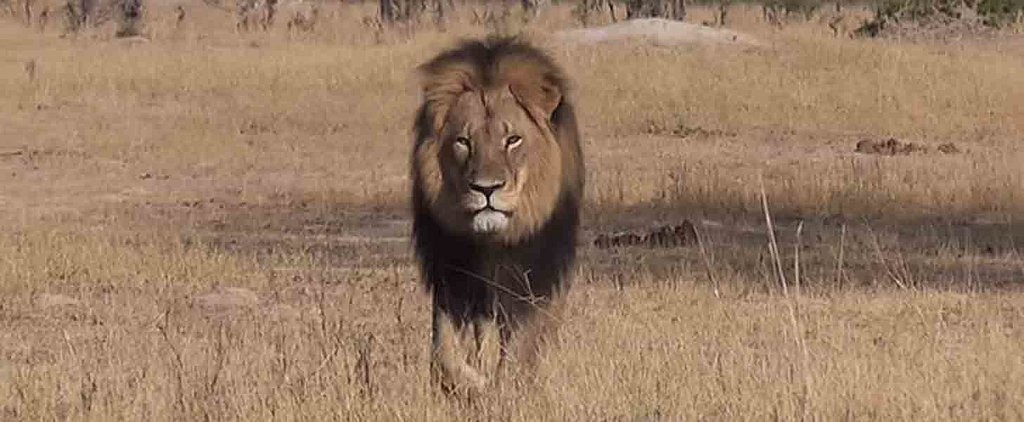 The Most Heartbreaking Reactions to the Killing of Cecil the Lion