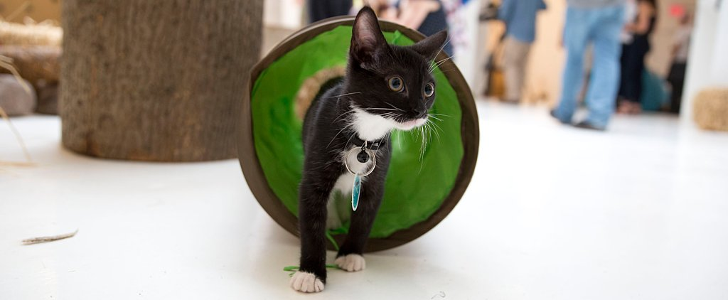Grab Your Favorite Sleeping Bag — It's Time For Cat Camp!
