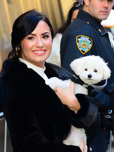 Demi Lovato Thanks Fans for Support After the Death of Her Dog Buddy: 'This Has Been the Most Painful Week of My Life'