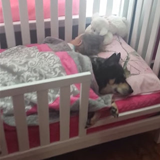 Pet Dog Sleeping With Toddler in Bed