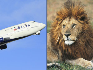 Delta, United and American Airlines All Ban the Transportation of Hunting Trophies
