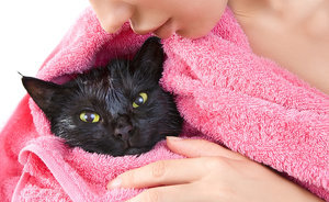 5 Things My Cat Does While I'm Taking a Shower