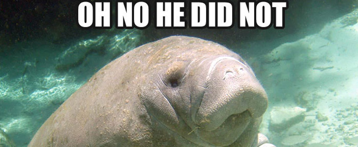 20 Calming Manatee Memes That Perfectly Describe Your Life