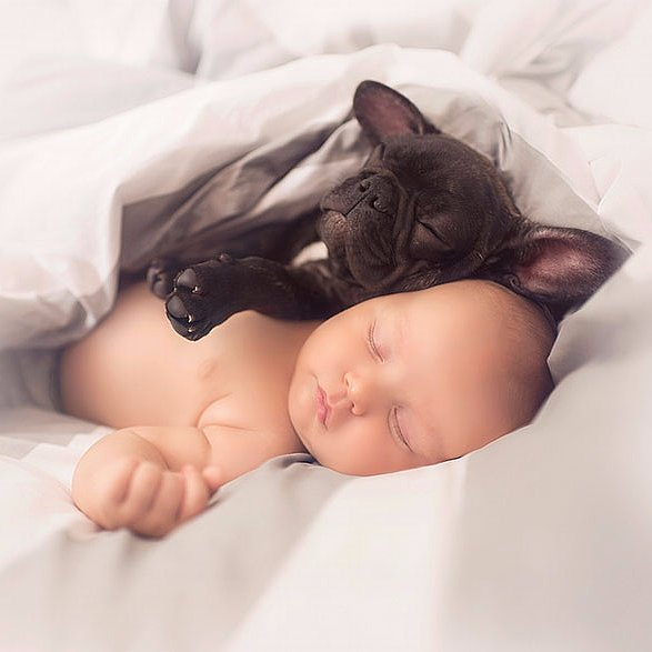 Popsugar Australia Love Sex: Baby And French Bulldog Pictures