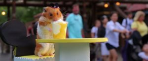 Tiny Hamster Has the Ultimate Best Day Ever With Mickey Mouse at Disney World