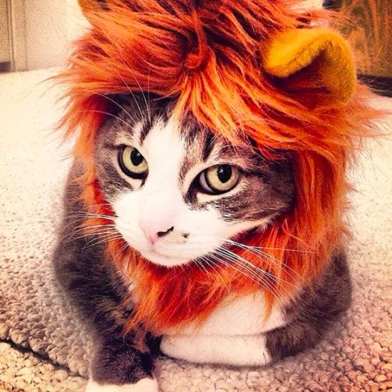 70+ Kitty Costumes That You Will Absolutely Love — but Your Cat Will Probably Hate