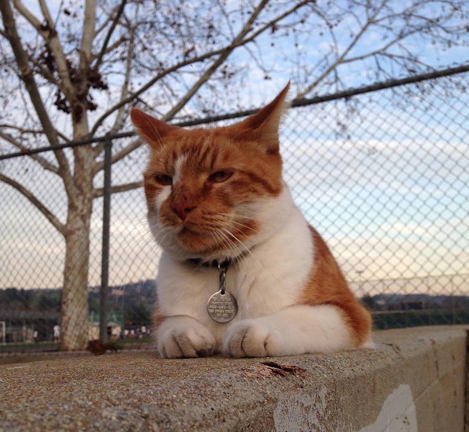 Gato se convirtió en estudiante de universidad. Increible