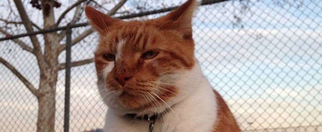 Cat Gets High School Student ID Card Just Like Everyone Else