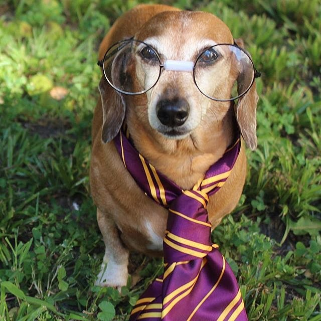 Harry Potter Costumes For Dogs Popsugar Pets
