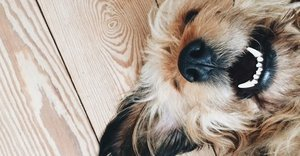 What Dogs REALLY Mean When They Smile, Yawn Or Stare At You