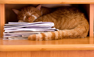 How Much Should Your Cat Sleep?